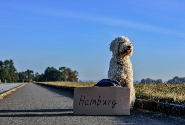 Comment voyager avec son chien à l'étranger