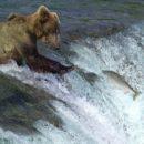 Idée voyage en Alaska