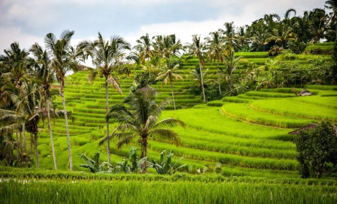 Riziere de Bali