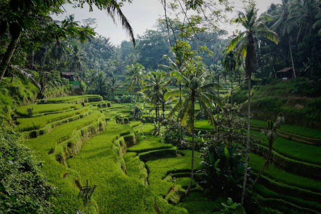 Voyager en Indonésie