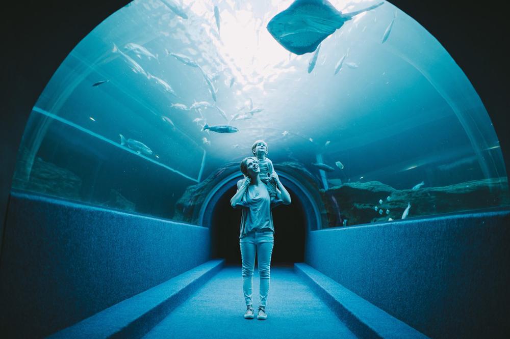 aquarium du monde