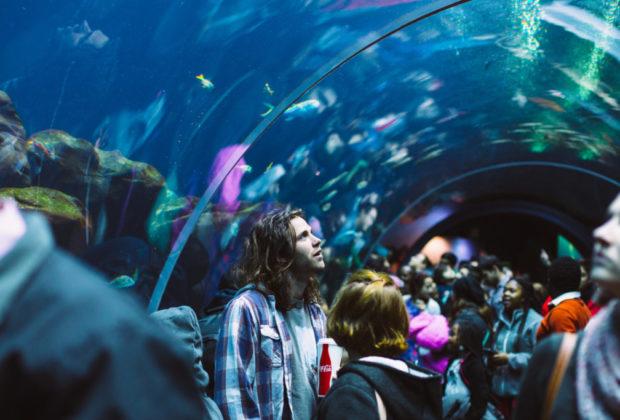 aquarium marseille