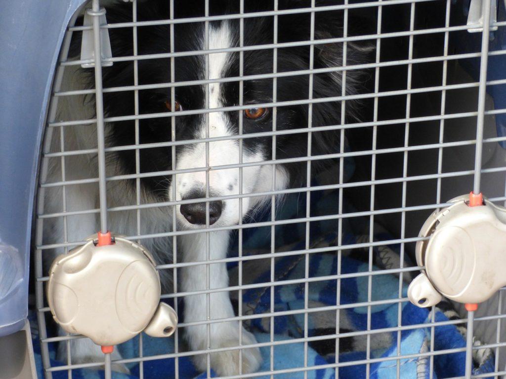 chien dans caisse de transport
