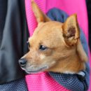 chien dans sac voyage