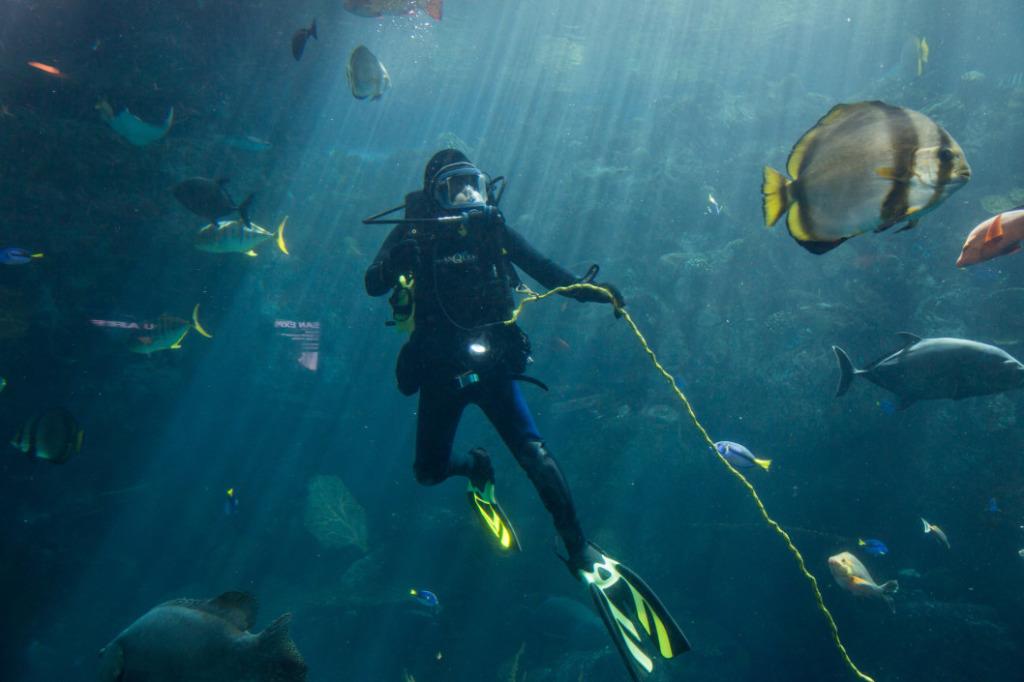 plongée à gran canaria