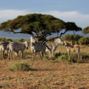 tourisme africain