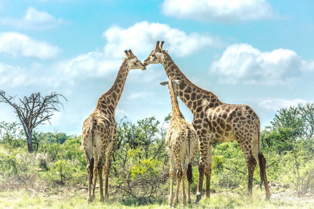 visiter sud afrique