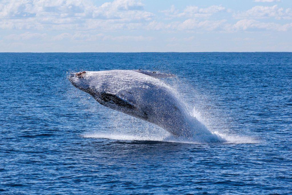 voir une baleine sur Madagascar